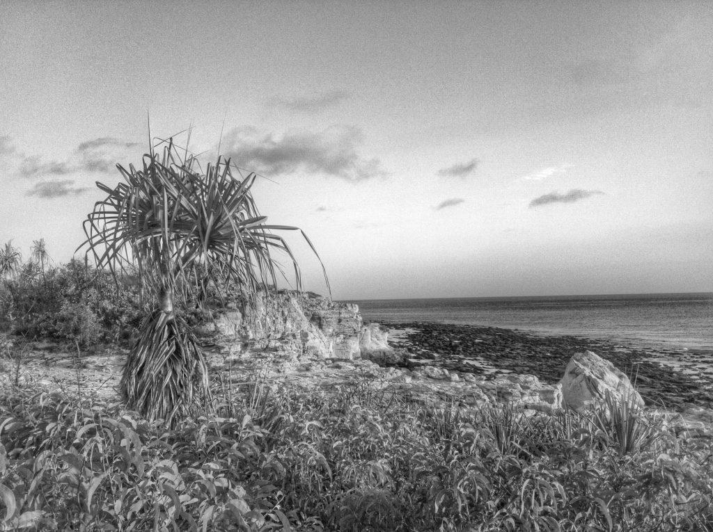 Pandanus View.